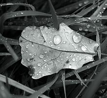 Leaf with sprinkling drops by martinbenito
