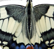 Swallow Tail, T Shirts & Hoodies. ipad & iphone cases Sticker