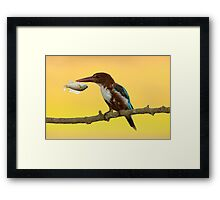 White-throated kingfisher with a fish in its beak Framed Print