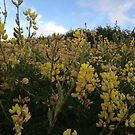 Wild Flowers by zijing