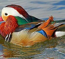 A Mandarin Duck by jozi1