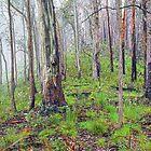 Eucalypts in the Mist by Harry Oldmeadow