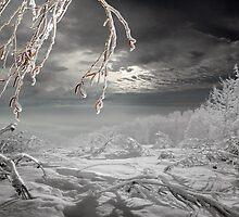 Frozen Landscape by Igor Zenin