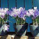 Spring-flowers in a flowerpot by Arie Koene