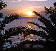 Sunset above the palms by Arie Koene