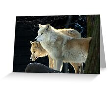 Two young wolves  Greeting Card