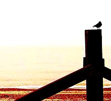 Crow at the Beach  by Vincent J. Newman
