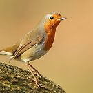 Robin by Mark Hughes