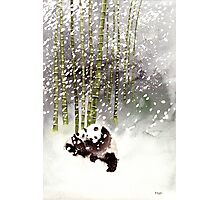 Pandas In The Snow Photographic Print