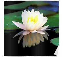 Lovely Waterlily Poster