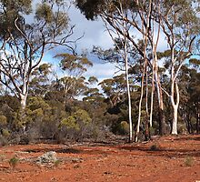 Nullarbor Trees  by Virginia  McGowan