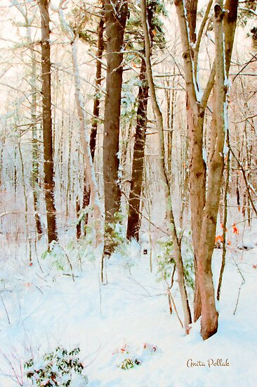 Our Backyard After the Snow by Anita Pollak