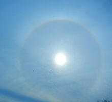 SOLAR HALO AND BIRDS FLYING HIGH by Sandra  Aguirre