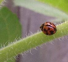Pretty ladybug by Jeannine de Wet