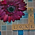 True Love + by Paul Stevens