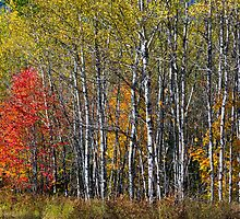 North Woods Autumn by Kenneth Keifer