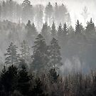 6.2.2014: Forest and Fog II by Petri Volanen