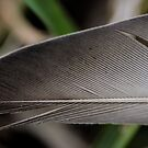 Feather 2 by Lacy O.