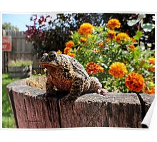 Adorable Toad with little orange flowers. Poster