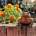 Adorable Toad with little orange flowers 2 by Barberelli