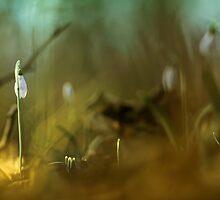 Enjoying the spotlight by Bob Daalder