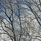 Crystal and Blue - Bones of Winter by MotherNature