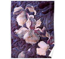 Quilted Iris With Beading Poster