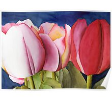 Triple Tulips Poster