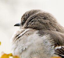 MOCKINGBIRD ON A WINTER DAY by Sandra  Aguirre