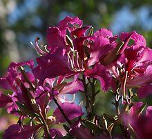 orchid tree - arbol de orquídea by Bernhard Matejka