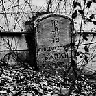 The Tiny Grave by A.David Holloway