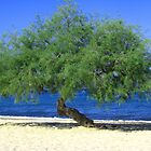 Beach tree by Maria1606