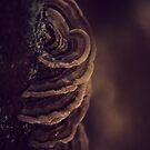 Fungus by Joshua Greiner
