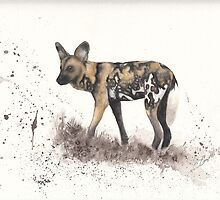 African Wild Dog #2 - Lycaon pictus by Morgan Campbell