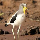 White-crowned Plover by JenniferEllen