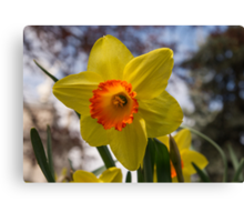 Happy Spring Blossom Canvas Print
