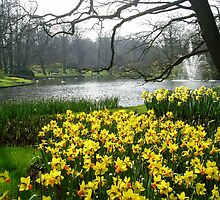 Daffodils in the Keukenhof by Arie Koene