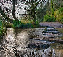 St Catherine's Woods II by Mark Bowden