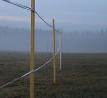 Pasture land. October. by UpNorthPhoto
