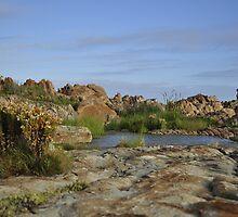Oases next to the sea, Betty's Bay by DebiDavis