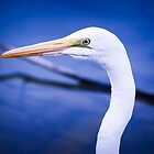 Egret Side View by George Lenz