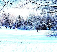 Beautiful Winter Scene by Vincent J. Newman