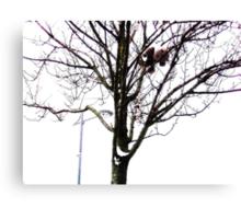 Bear Stuck Up A Tree Canvas Print