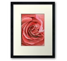 Watercolor Rose Framed Print