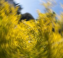 Spinning Tree 2 by GiulioCatena