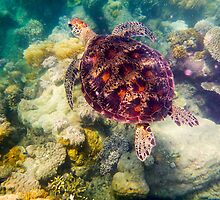 Australian Tropical Reef Turtle 4   (Snorkeling) by GiulioCatena