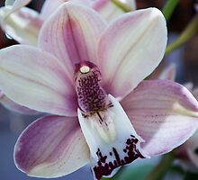 Tropical Orchid 15 by GiulioCatena