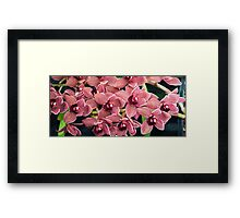 Tropical Orchid 10 Framed Print