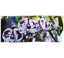 Tropical Orchid 8 Poster