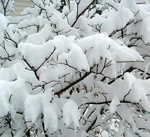 Tiny Branches Covered In Snow by Jane Neill-Hancock